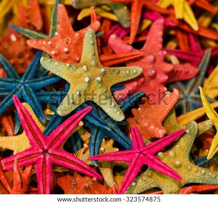 Group of colorful sea stars - stock photo