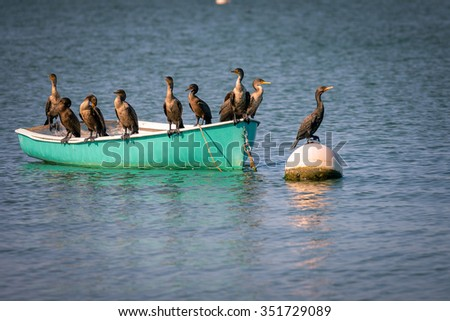 Group of cormorants resting on the boat - stock photo
