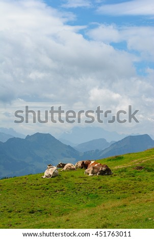 Group of 5 Cows resting on the Kronberg Meadows in the Swiss Alps. Overlook on the Alpstein Mountain Range. Canton of Appenzell Innerrhoden, Switzerland. - stock photo