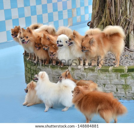 Group of cute puppy outdoors  - stock photo