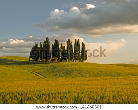 Group of cypress tree in Tuscan landscape of the Val d'Orcia as the sun starts to set turning the field orange - stock photo