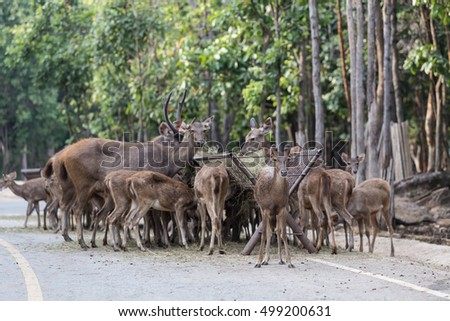 Group of deer family grazing eating feeding green grass in zoo