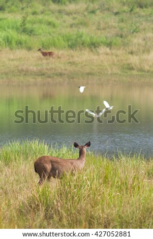Group of deer feeding in a grass field by the lake