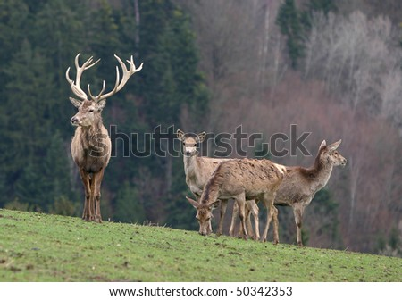 group of deer on autumn background - stock photo