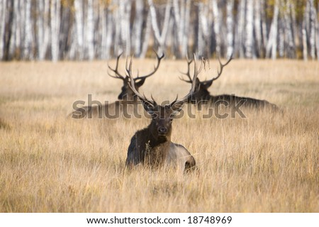Group of deers is at grass - stock photo