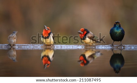 Group of different birds at edge of pond with reflections in water - stock photo