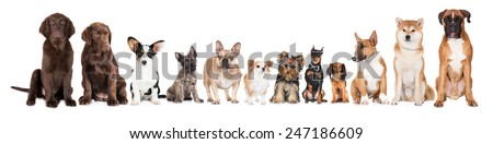 group of different breed dogs sitting in a row - stock photo