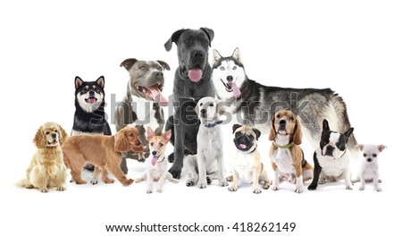 Group of different breed dogs sitting in front, isolated on white - stock photo