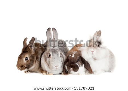 Group of different breeds rabbits on the white background - stock photo