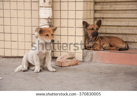 Group of Dog lying on stair  and looking for food