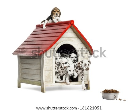 Group of dog puppies playing with a dog kennel, isolated on white - stock photo