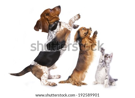 group of dog standing on hind legs - stock photo