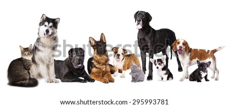 Group of dogs and cats - stock photo