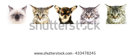 Group of dogs and cats in front of white background with space for your text - stock photo