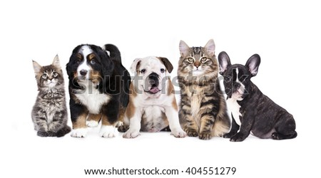 Group of  dogs and cats sitting in front of a white background - stock photo