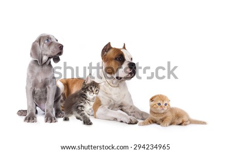 Group of dogs and kitens sitting in front of a white background - stock photo