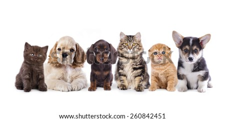 Group of  dogs and  kittens sitting in front of a white background - stock photo