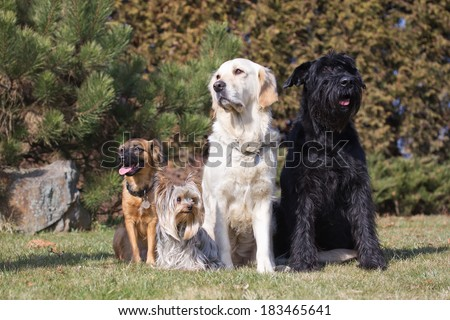 Group of dogs are sitting on the lawn. Two of them are looking to the left and two to the right. - stock photo