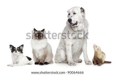 Group of dogs, cat and ferret on a white background