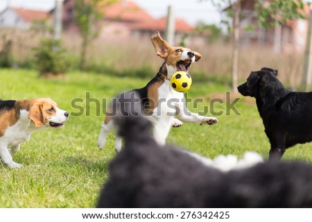 Group of dogs chasing a ball - stock photo
