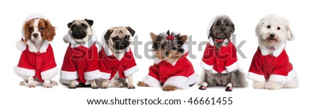 Group of dogs in a row dressed as Santa Claus in front of white background - stock photo