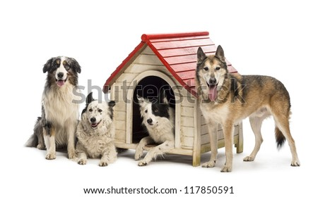 Group of dogs in and surrounding a kennel against white background - stock photo