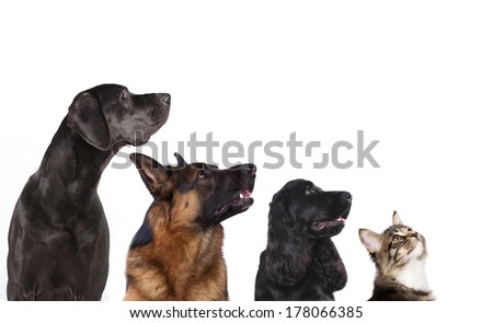 group of dogs is looking up - stock photo
