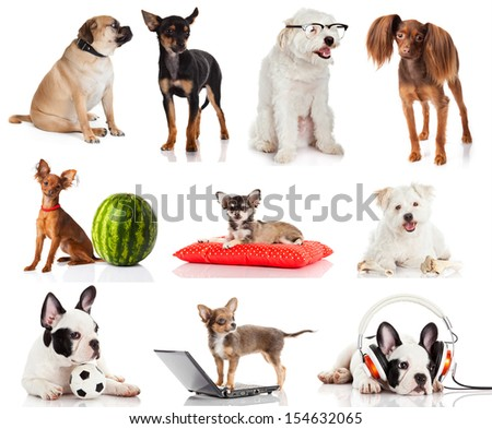 Group of dogs isolated on white background.