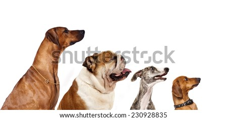 group of dogs  looking up - stock photo