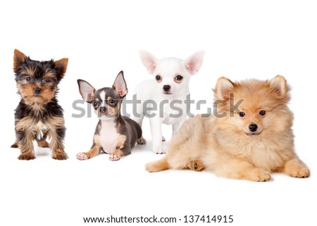 Group of dogs of various breeds, on a white background.