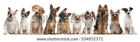 Group of dogs sitting against white background - stock photo