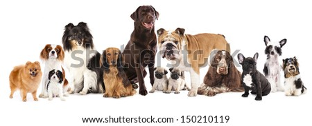 Group of  dogs sitting in front of a white background - stock photo