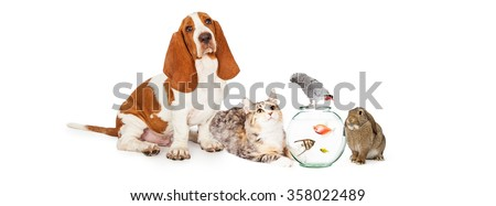 Group of domestic pets together including a dog, cat, fish, bird and bunny - stock photo