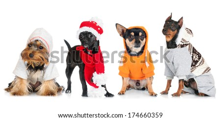 group of dressed dogs - stock photo