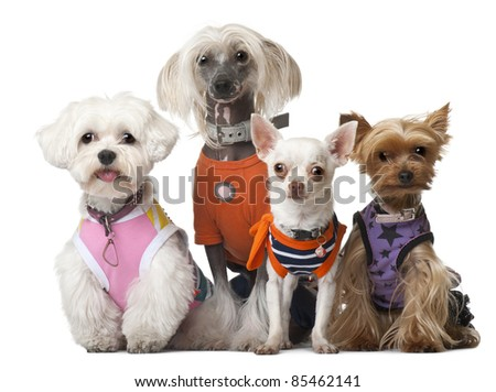 Group of dressed dogs in front of white background - stock photo