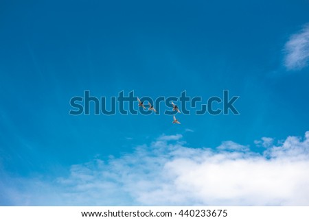 Group of Ducks bird flying at blue sky Background - stock photo