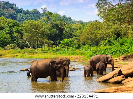 Group of elephans in jungle river - stock photo