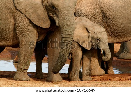 Group of elephants with baby at the watering hole - stock photo