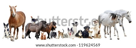 group of farm animals and pets in front of white background - stock photo