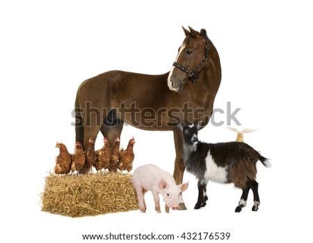 Group of farm animals isolated on white - stock photo