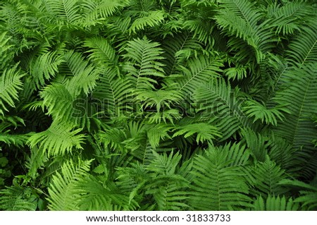 group of fern leaves growing in summer