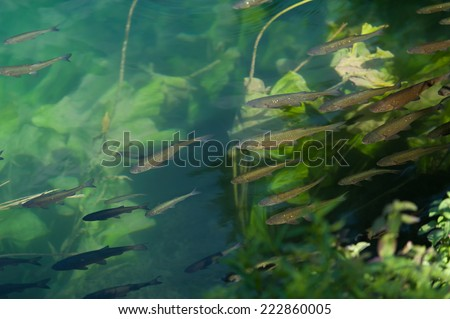 Group of fish swimming in the clear water surrounded by algae and sunlight.