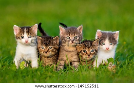 Group of five little kittens sitting on the grass - stock photo