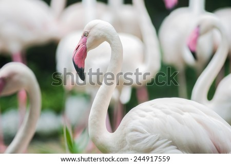 Group of flamingos at the water - stock photo