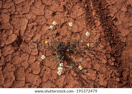 group of flowers blooming in the dry land in castilla la mancha, spain.  - stock photo