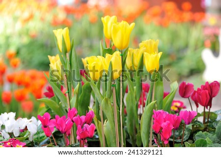 group of flowers in the garden - stock photo