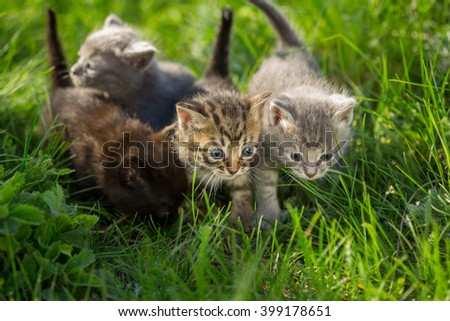 Group of four little kittens on the grass