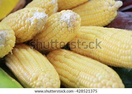 Group of fresh corn vegetable food background.select focus.soft focus the field for background. - stock photo