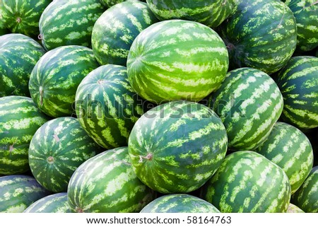 Group of fresh ripe green watermelons at a bazaar - stock photo