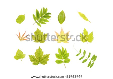 Group of fresh young Spring leaves
